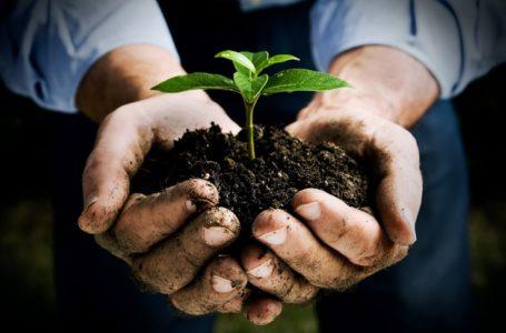 ISMEA: Nuova moratoria dei mutui per le imprese agricole