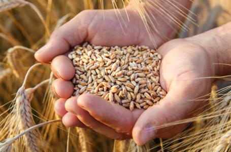 Accordo quadro filiera grano biologico Confagricoltura – Italmopa