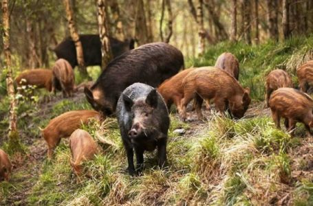 Domanda indennizzo danni da fauna selvatica