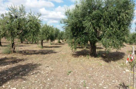 Gli adempimenti delle imprese agricole
