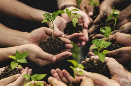 Agricoltura sociale: quarta edizione del bando di confagricoltura e onlus senior, in collaborazione con reale foundation