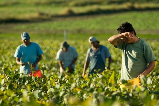 Incrocio tra domanda e offerta di lavoro per l'assunzione della manodopera in agricoltura – No al Caporalato