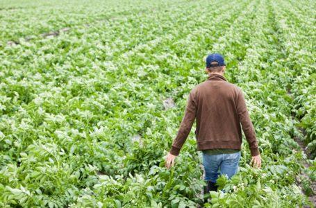 Scade il 31 marzo 2020 il termine per presentare la domanda di indennità di disoccupazione agricola per le giornate relative al 2019