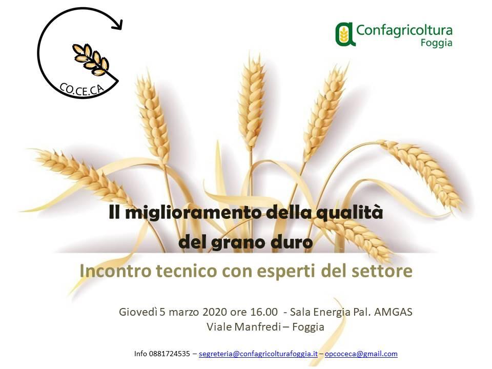Il miglioramento della qualità del grano duro