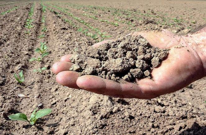 Siccità: a rischio le colture invernali e i cereali