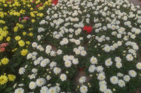 Emergenza COVID-19, danni al settore florovivaistico: avviso pubblico per manifestazioni di interesse