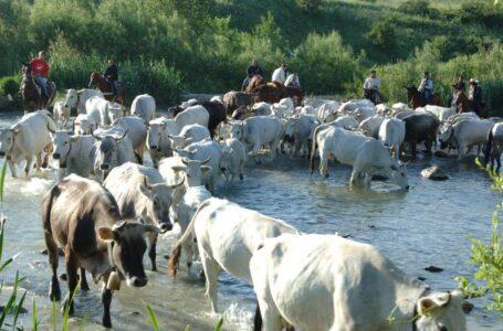 A rischio la pratica della transumanza – Confagricoltura Foggia al fianco degli allevatori