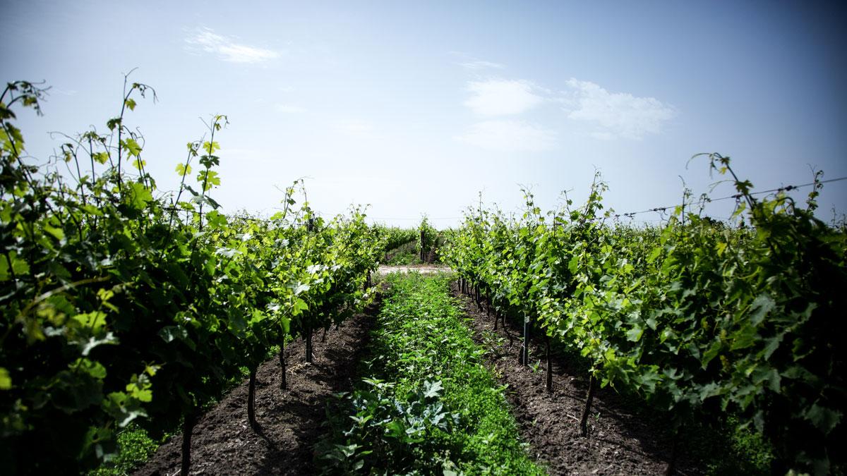 Effetto COVID su imprese italiane del vino
