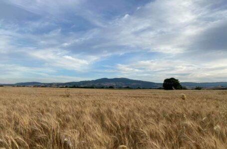 Navi in fila per scaricare grano duro estero: per farne pasta nazionale?