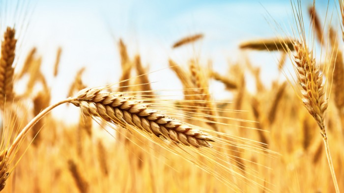 Fondo grano duro, pubblicato dal Governo il decreto per gli anni 2020-2022. E quello degli anni pregressi?