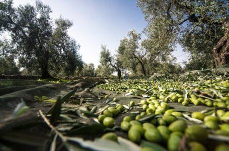 Piattaforma Multiregionale Agri Italia del FEI: sostegno alle PMI agricole