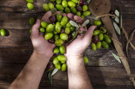 Innovazione, digitalizzazione, competenze nel settore olivicolo: il punto di vista degli imprenditori