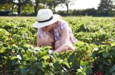 Esonero contributi agricoli, domanda INPS entro il 30 settembre 2021
